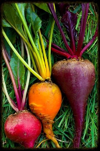 Naturopathic Cleanse Diet Portland Oregon