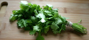 cilantro-bunch-cropped