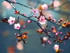 Spring is Here… Along With Your Seasonal Allergies